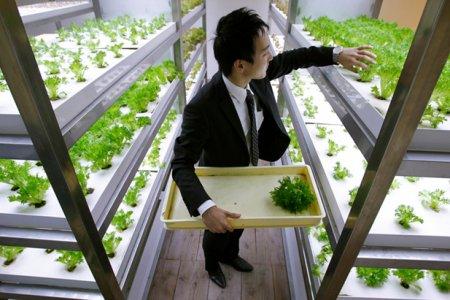 Фото 1 ферма в офисе