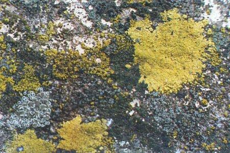 7 слов об органическом бетоне