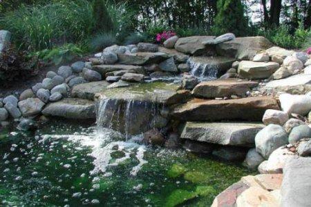 Фото 1 Выбор растительности